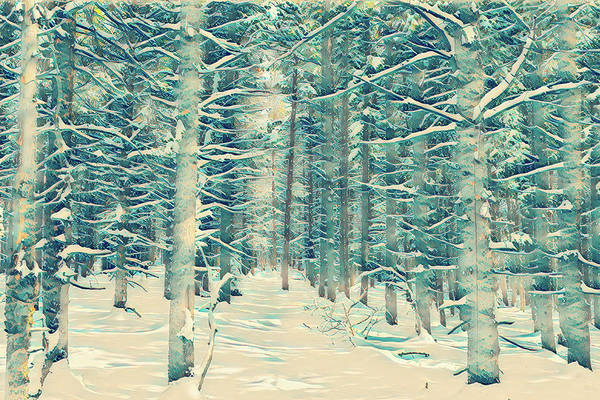 Wall Art - Photograph - Snowy Pines by Eric Glaser
