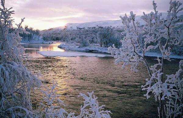 Birch River Photograph - Snowy Riverscape, Vindelfjallen Nr by Christer Fredriksson