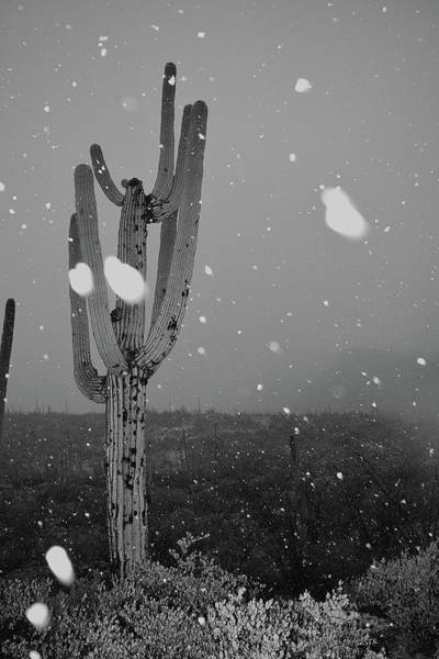 Photograph - Snowy Saguaro Black And White by Chance Kafka