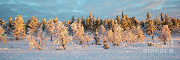 Wall Art - Photograph - Snowy Trees Winter Panorama by Delphimages Photo Creations