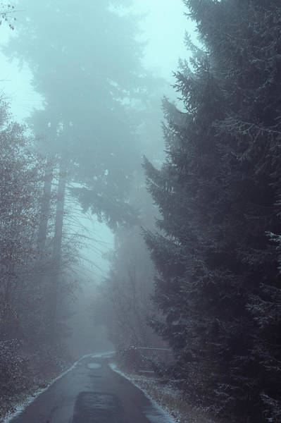 Photograph - Snowy Way Through Misty Woods by Jenny Rainbow