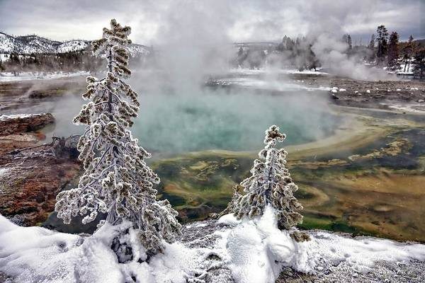 Nature Wall Art - Photograph - Snowy Yellowstone by Jason Maehl