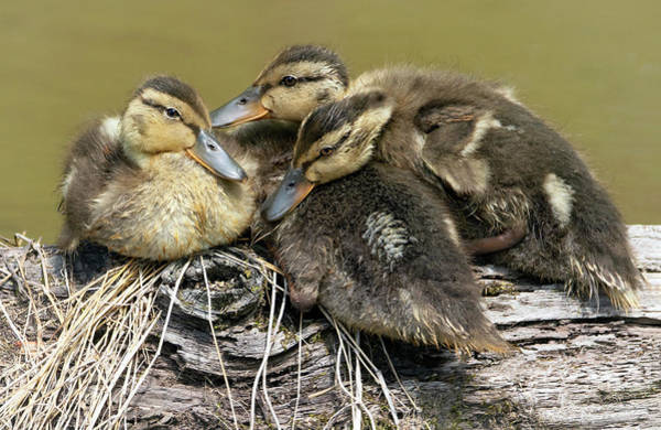 Wall Art - Photograph - Snuggle Time by Art Cole