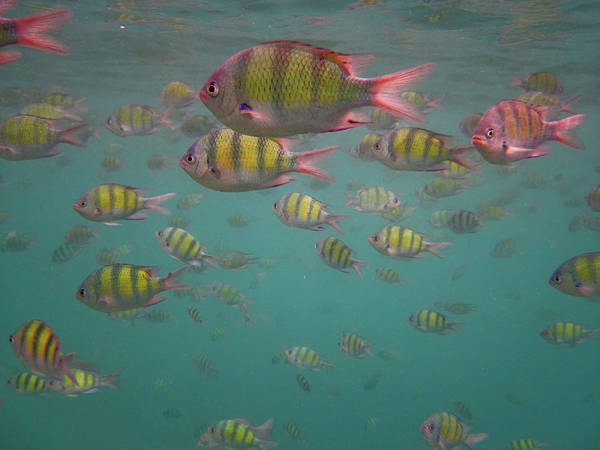 Phi Photograph - So Many Fishes by Essai