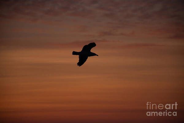 Wall Art - Photograph - Soar Your Wings by Ellen Weist
