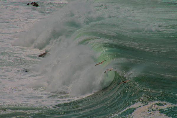 Point Vicente Wall Art - Photograph - Soaring Above The Waves by Heather Gaines