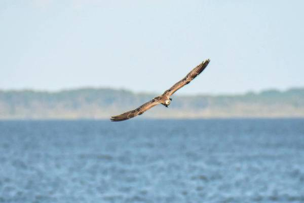 Photograph - Soaring Away by Jeremy Guerin
