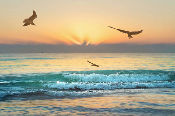 Wall Art - Photograph - Soaring In The Morning by Debra and Dave Vanderlaan