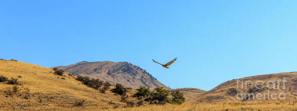 Wall Art - Photograph - Soaring Next To Squaw Butte by Robert Bales