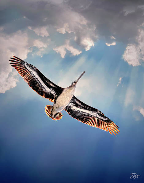 Photograph - Soaring Overhead by Endre Balogh