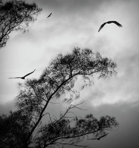 Photograph - Soaring by Robert Stanhope