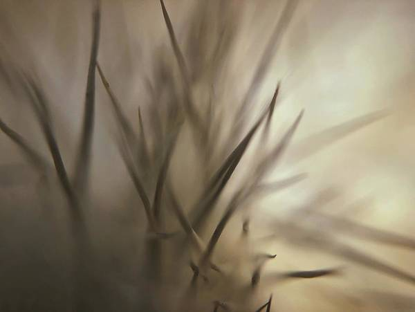 Photograph - Soft And Spiky by Michael Van Huffel