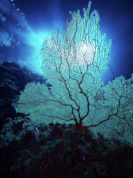 Undersea Photograph - Soft Coral Undersea, Palau, Micronesia by Shirokuma/a.collectionrf