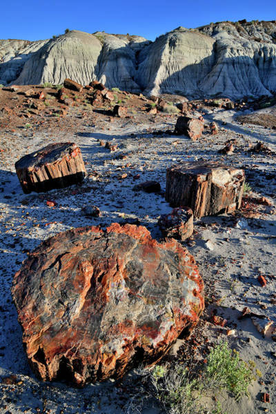 Photograph - Soft Evening Light On Jasper Forest Petrified Wood by Ray Mathis