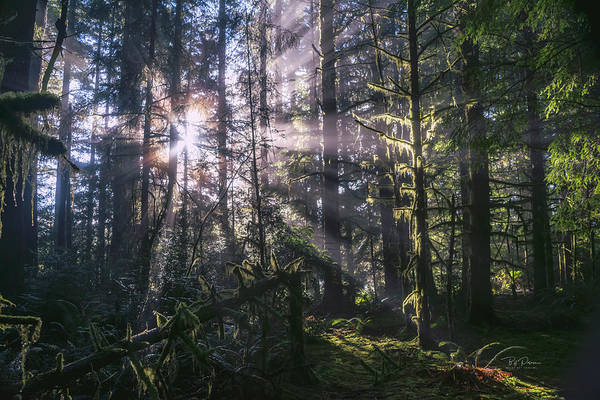 Photograph - Soft Lit Forest by Bill Posner