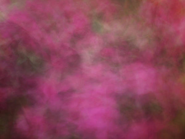 Photograph - Soft Pastel Flower Like Abstract Blurred Design Of Pinks And Greens by Teri Virbickis