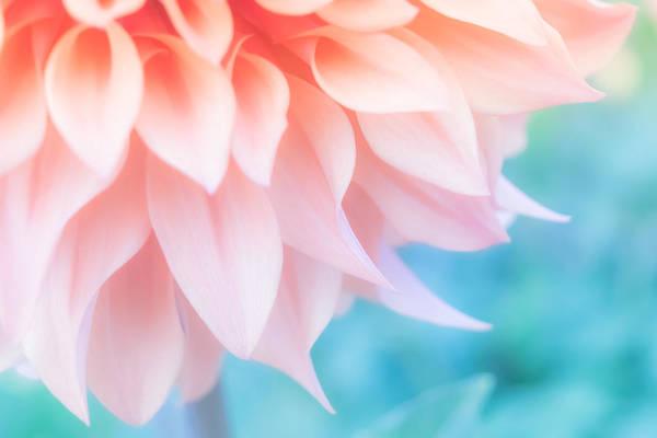 Wall Art - Photograph - Soft Peachy Dahlia by Bonnie Bruno