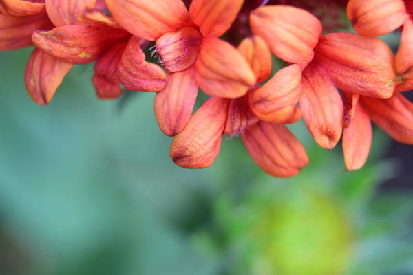 Wall Art - Photograph - Soft Peachy Petals by Bonnie Bruno