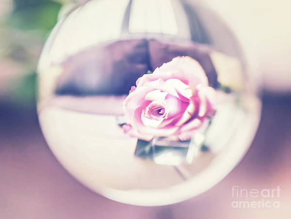 Wall Art - Photograph - Soft Pink Rose by Flo Photography