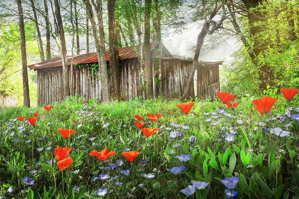 Photograph - Soft Spring Wildflowers In The Country by Debra and Dave Vanderlaan