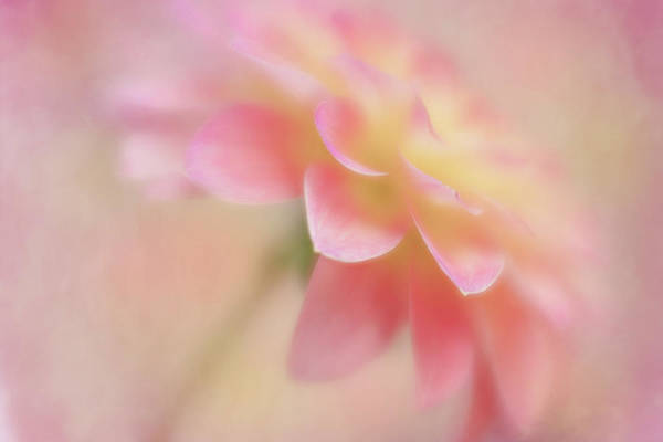 Photograph - Soft Touch by Mary Jo Allen
