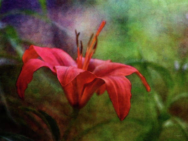 Photograph - Soft Vermilion 1738 Idp_2 by Steven Ward