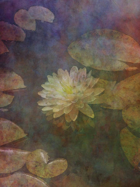 Photograph - Soft White Lotus Lily Pond 2938 Idp_3 by Steven Ward