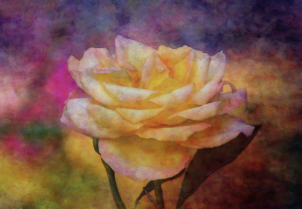 Photograph - Softly 5569 Idp_2 by Steven Ward