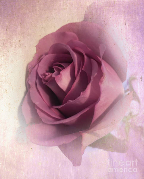 Photograph - Softly Muted Rose by Luther Fine Art