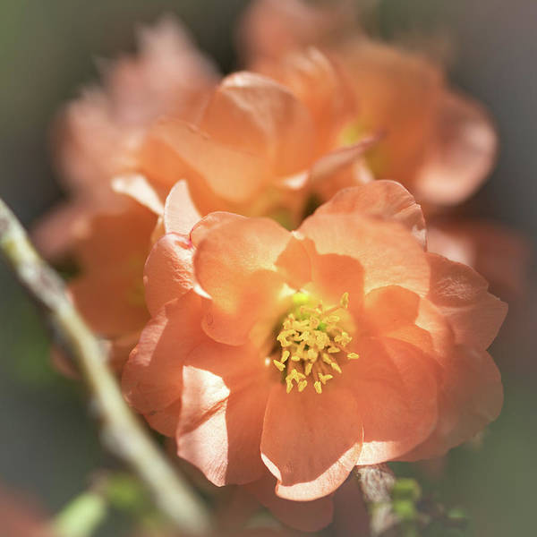 Photograph - Softly Sunlit By Tl Wilson Photography by Teresa Wilson