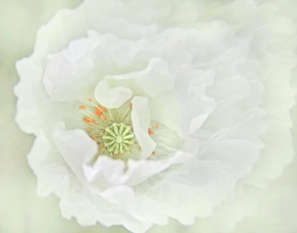 Wall Art - Photograph - Softness Of A White Oriental Poppy Flower by Jennie Marie Schell