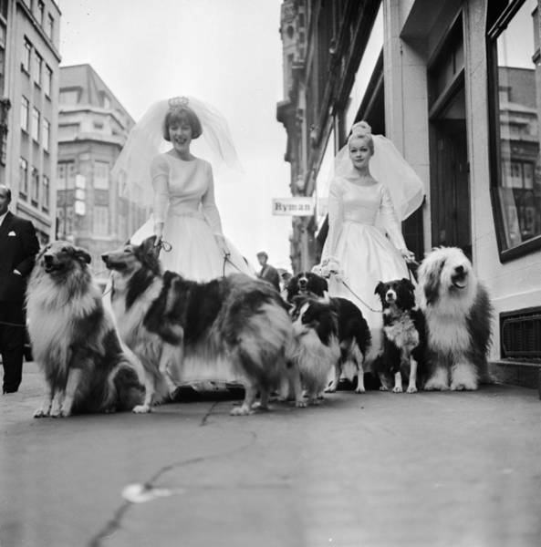 Dress Photograph - Soho Sheep Dogs by Ronald Dumont
