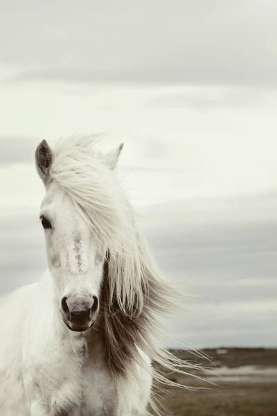White Horse Wall Art - Photograph - ísold by Gigja Einarsdottir