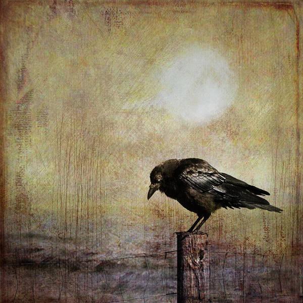 Photograph - Solitary Crow by Theresa Tahara
