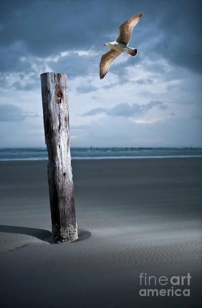 Wall Art - Photograph - Solitary Flight by Dan Carmichael