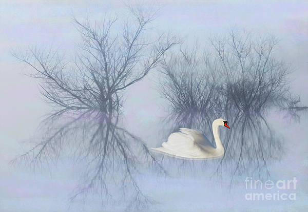 White Swan Photograph - Solitary Swan by Laura D Young