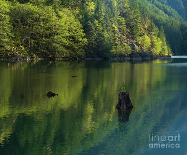 Wall Art - Photograph - Solitary Tree Forest Reflections by Mike Reid