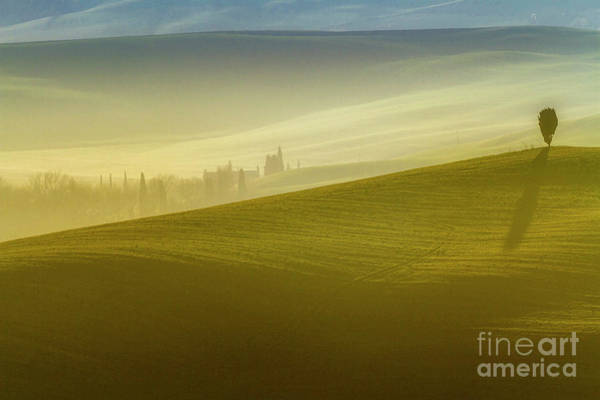Photograph - Solitary Tree On The Hill In Crete Senesi by Heiko Koehrer-Wagner
