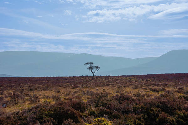 Photograph - Solitary Tree - Scottish Highlands by Bill Cannon