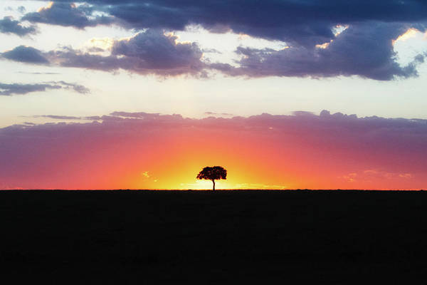 Wall Art - Photograph - Solitary Tree Silhouette At Colorful African Sunset by Susan Schmitz