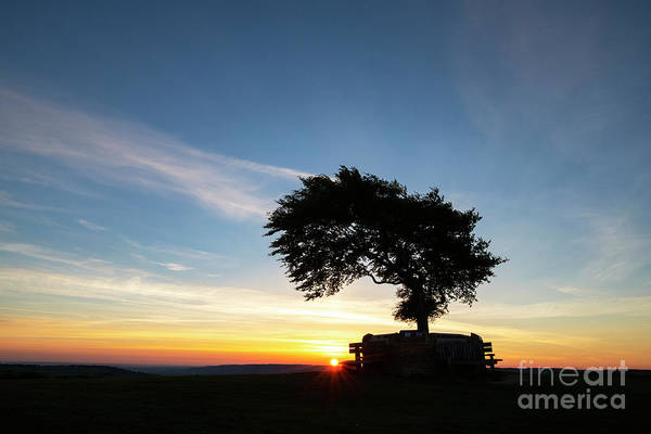 Photograph - Solo Beech On Cleeve Hill At Sunrise by Tim Gainey