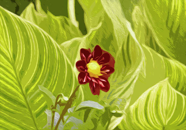 Digital Art - Solo Dahlia by Garden Gate magazine