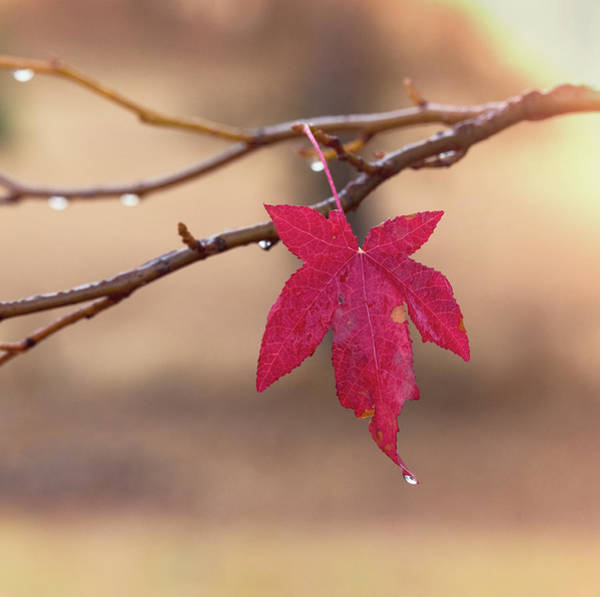 Photograph - Solo Leaf by Jonathan Hansen