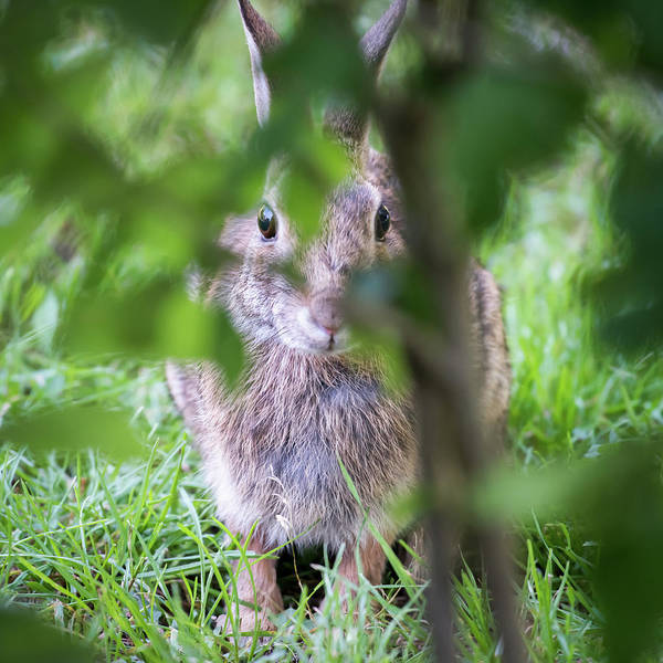 Photograph - Somebunny Is Watching You Square by Terry DeLuco