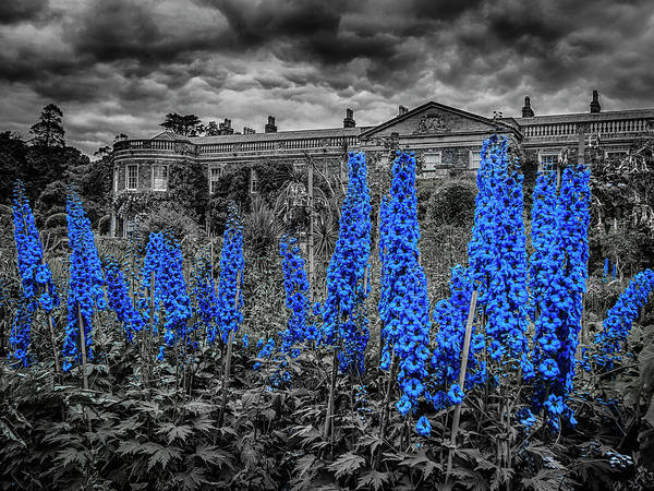 Photograph - Something Blue by Alan Campbell