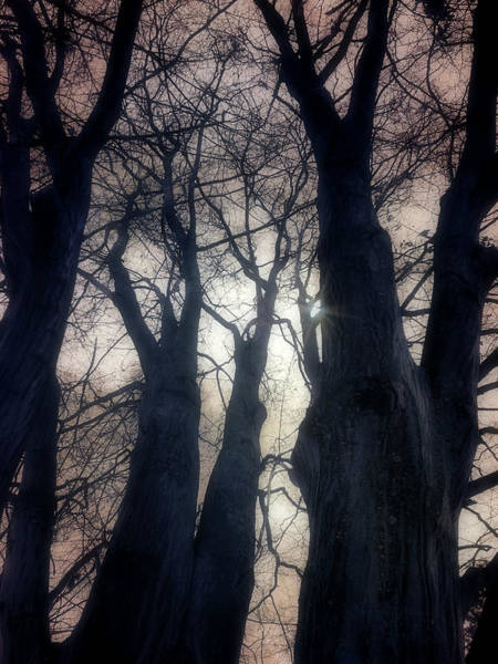 Photograph - Sometimes Wisdom Comes From Those Who Can Not Speak by Tara Turner