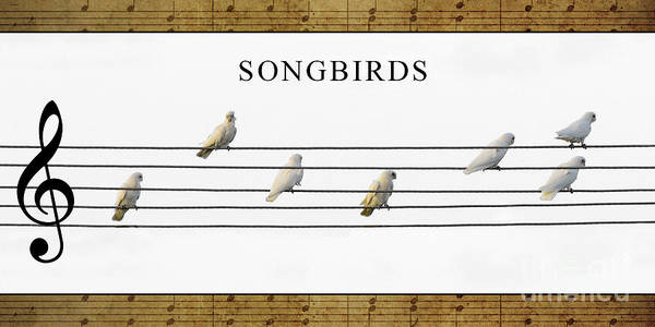 Photograph - Songbirds by Russell Brown