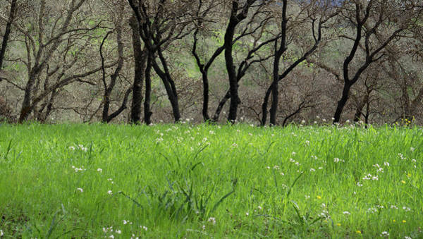 Photograph - Sonoma Valley Rp_1148_18 by Tari Kerss