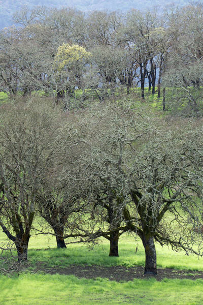 Photograph - Sonoma Valley Rp_1439_18 by Tari Kerss