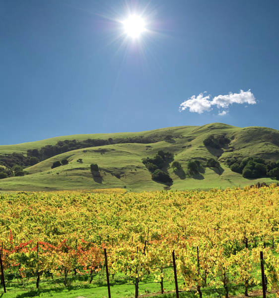 Sonoma County Photograph - Sonoma Valley Winery Vines by Ivanastar
